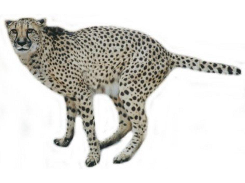 23+ Clipart Cheetah.