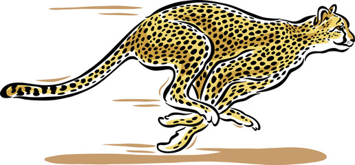 Cheetah clipart fast pencil and in color cheetah.