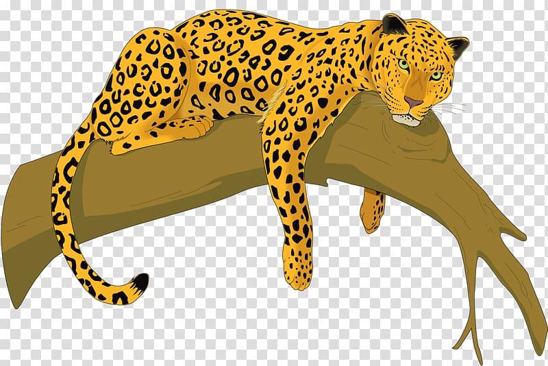 Cheetah Amur leopard Felidae , leopard transparent background PNG.