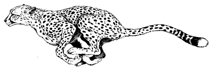 Cheetah Clipart Black And White.
