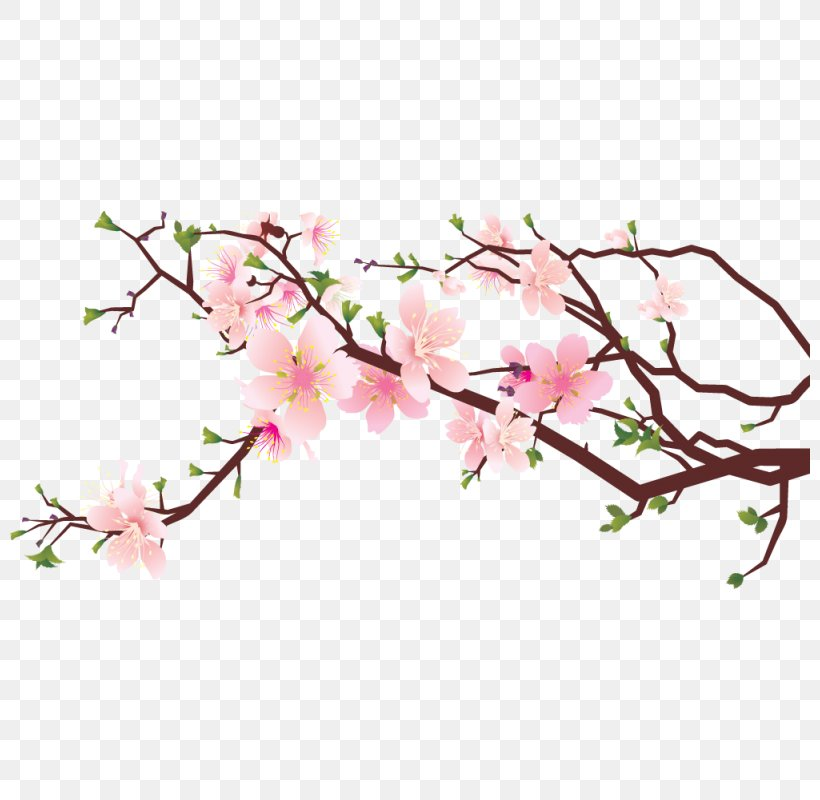 Cherry Blossom Clip Art Image Drawing, PNG, 800x800px.