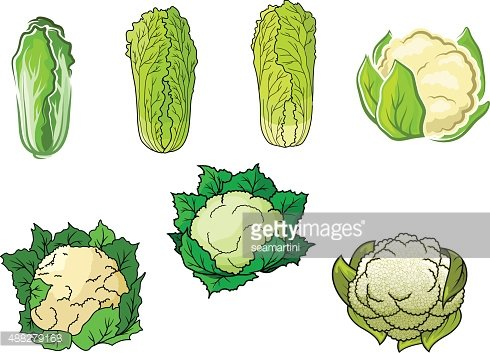 Blumenkohl und Chinakohl Gemüse Clipart Image.