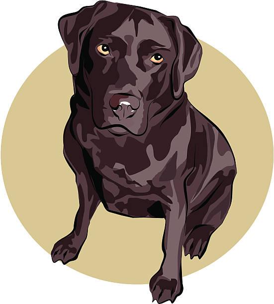 Best Chocolate Labrador Illustrations, Royalty.