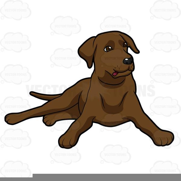 Chocolate Lab Puppy Clipart.