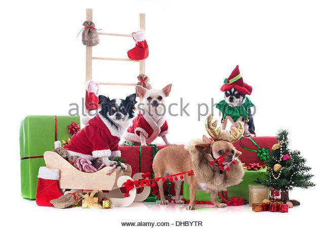 Dog Sleigh Christmas Stock Photos & Dog Sleigh Christmas Stock.