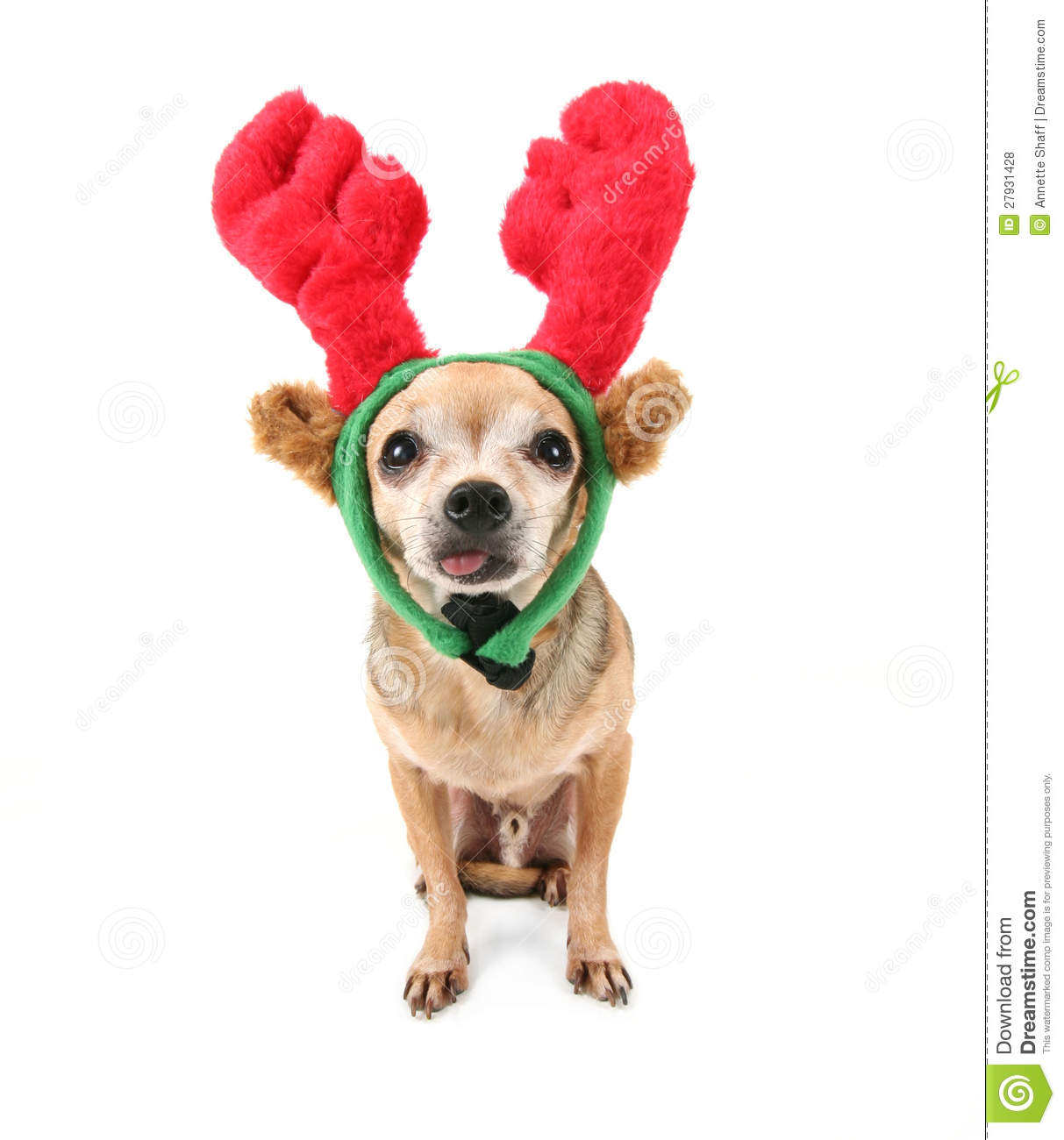 A Cute Chihuahua In A Christmas Hat Royalty Free Stock Photos.