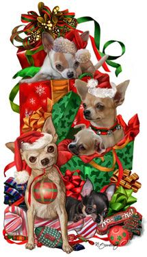 Long Coat Chihuahua Christmas Cards are 8 1/2