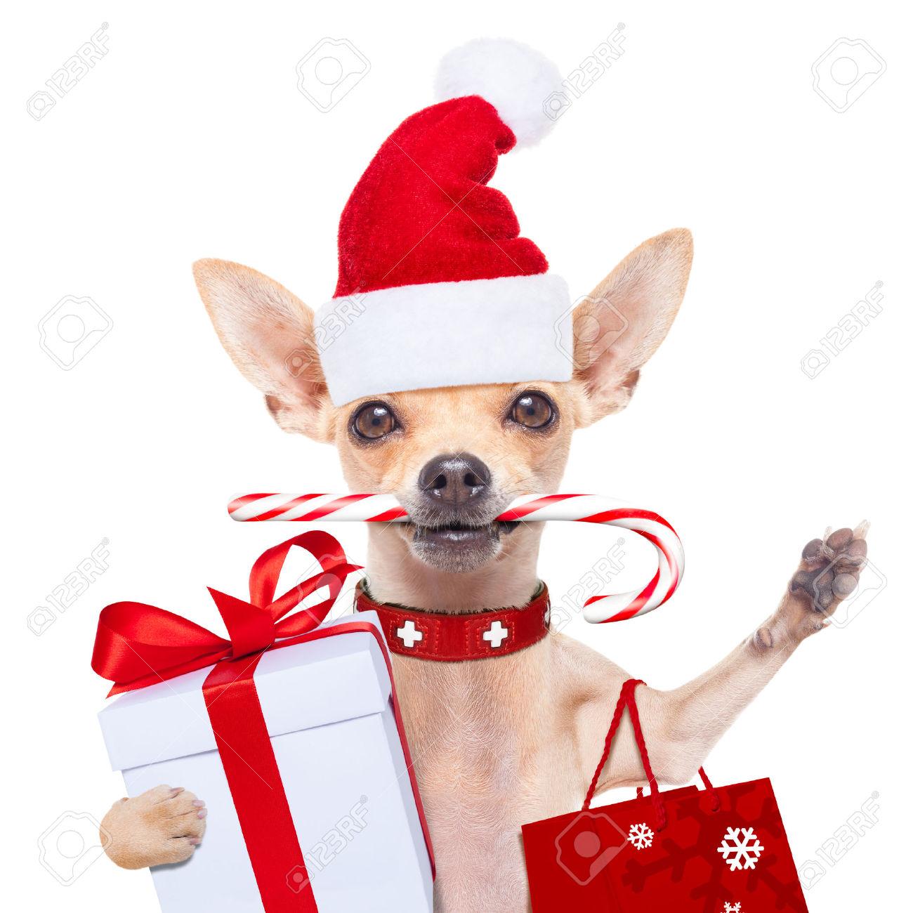 Chihuahua Santa Claus Shopping Bag Dog Ready For Christmas.. Stock.