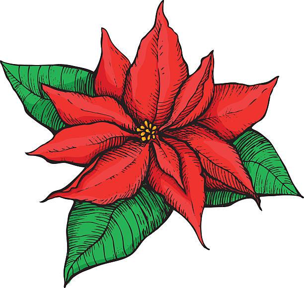 Poinsettia Clip Art, Vector Images & Illustrations.