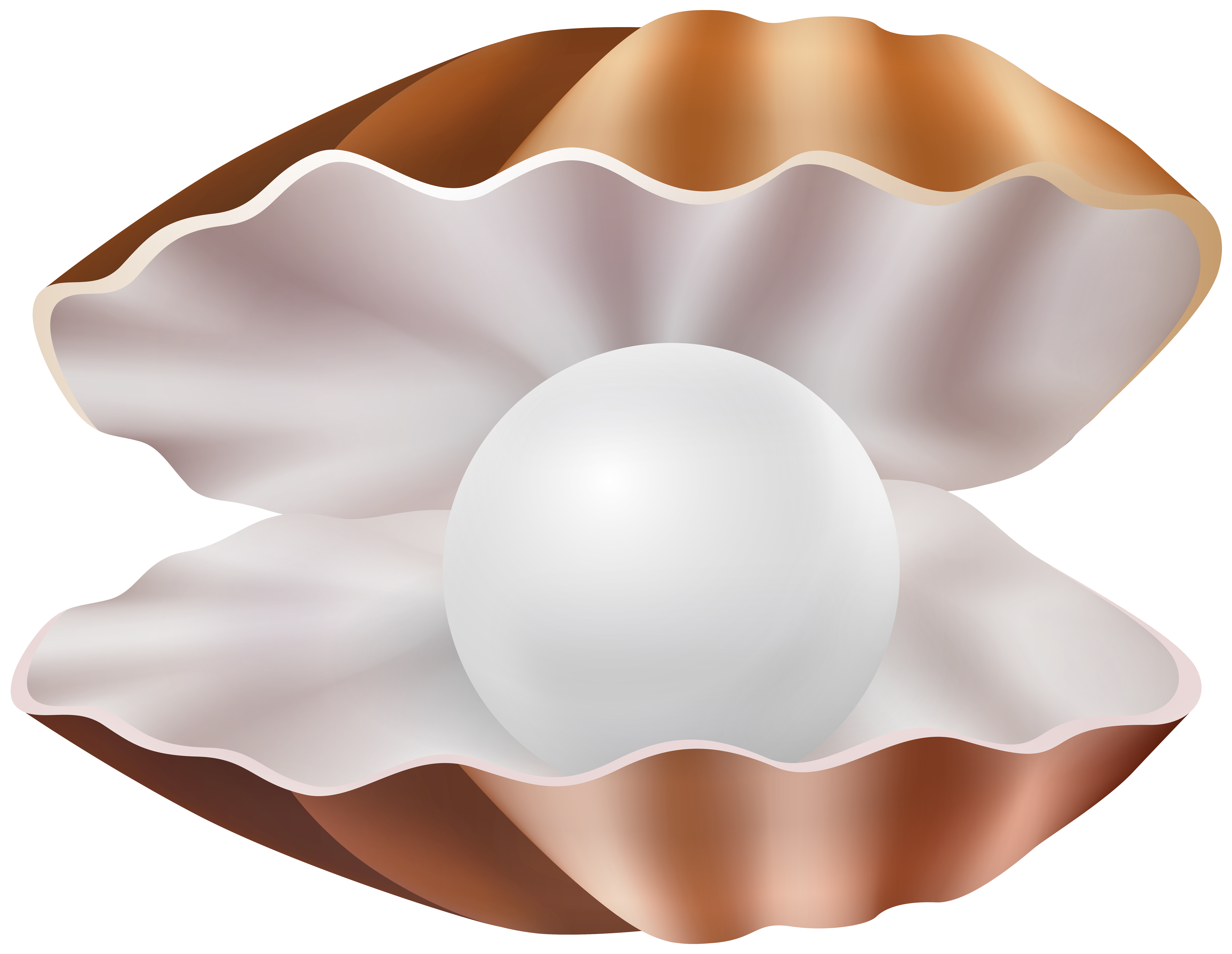 Clam Shell PNG Clipart.