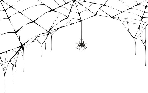 Best Spider Web Illustrations, Royalty.