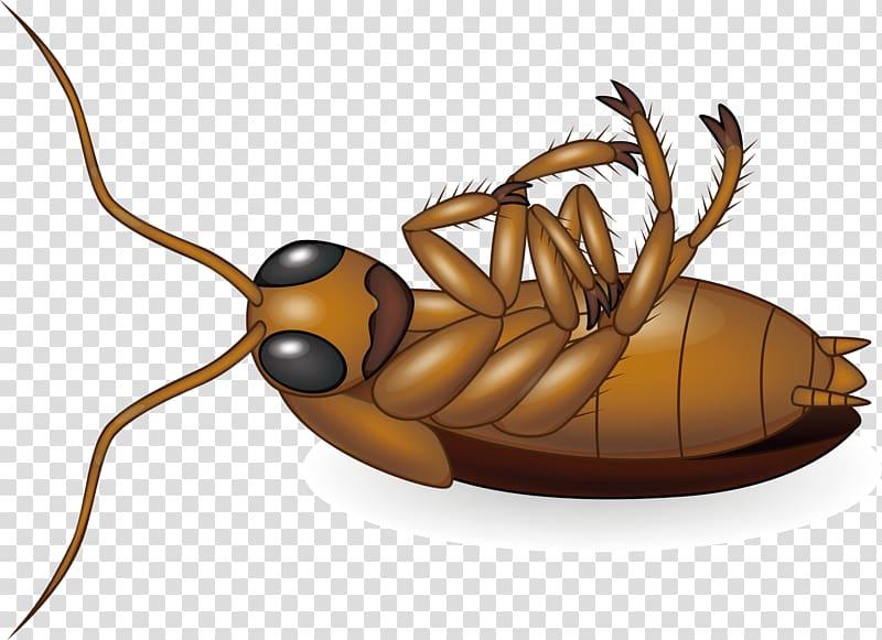 Cockroach , Cockroach design creative transparent background.