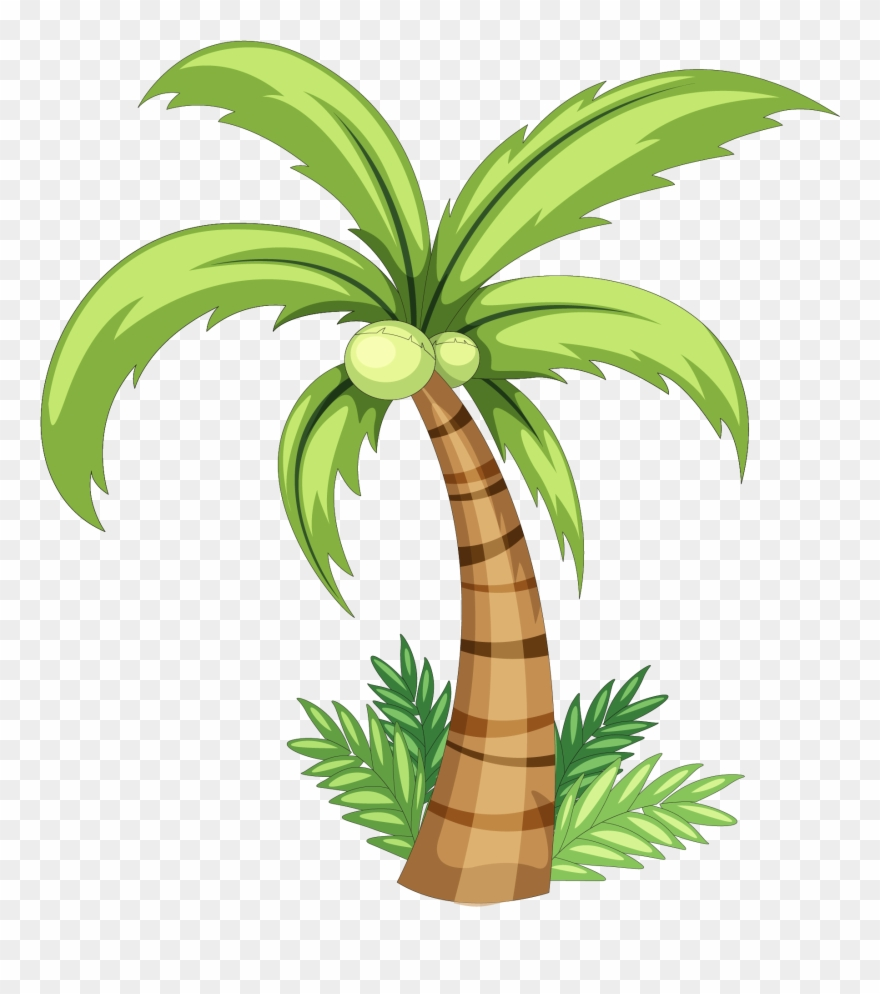 Coconut Drawing Clip Art.