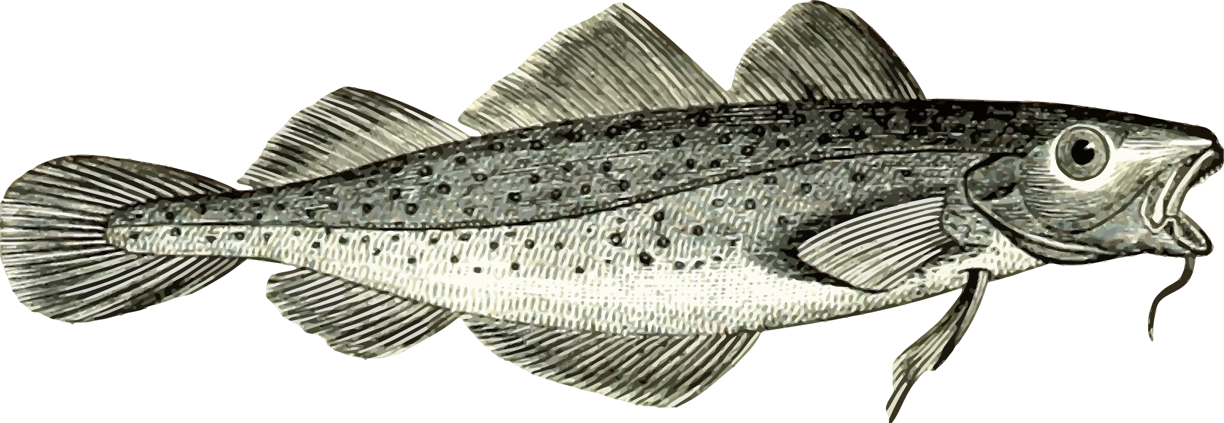 Cod fish vector clipart image.