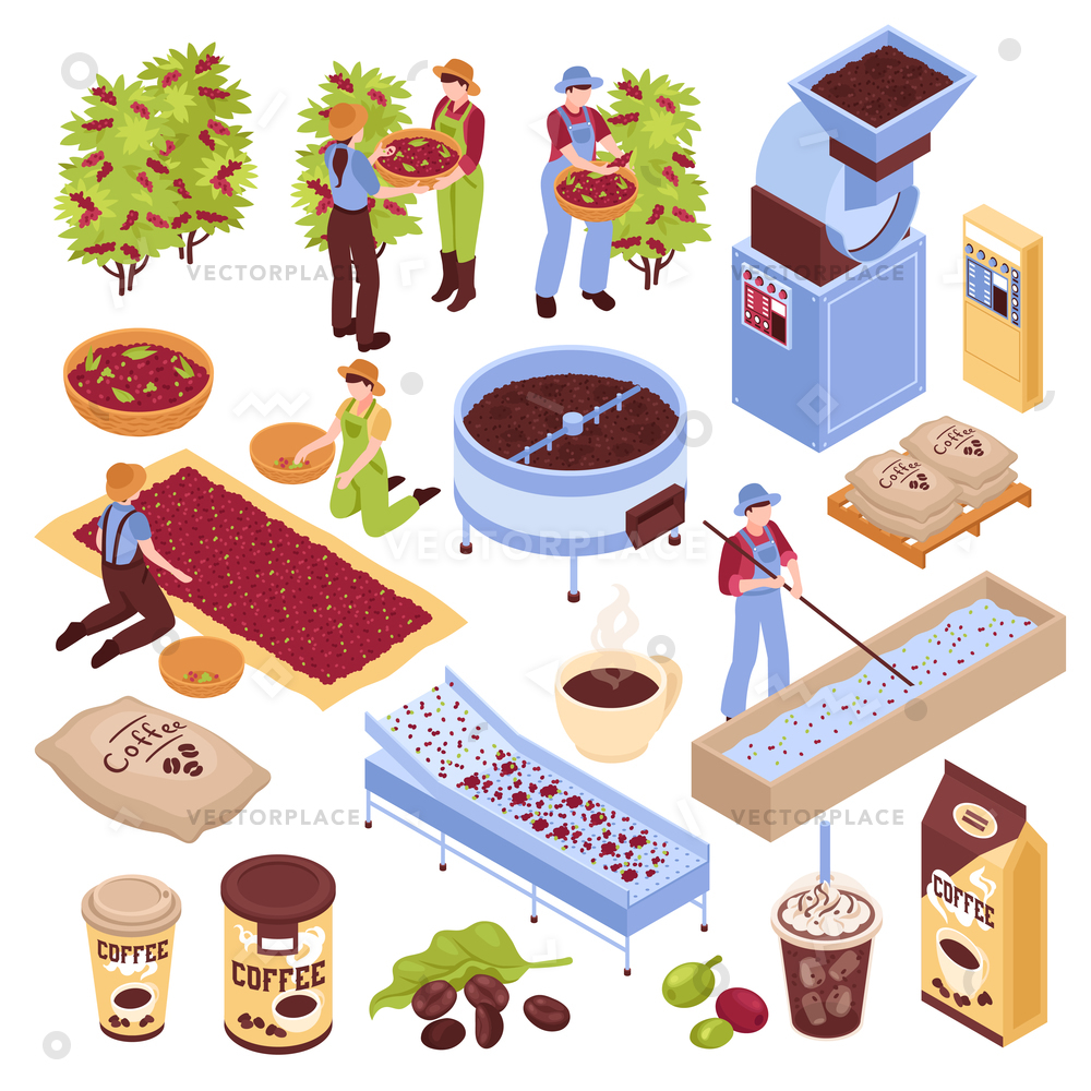 Isometric coffee production set with isolated images representing different  stages of coffee bean production with people vector illustration.