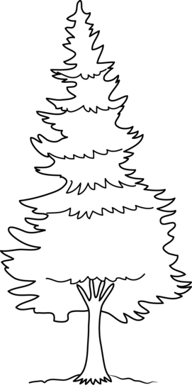 Pine Tree Coloring Page.