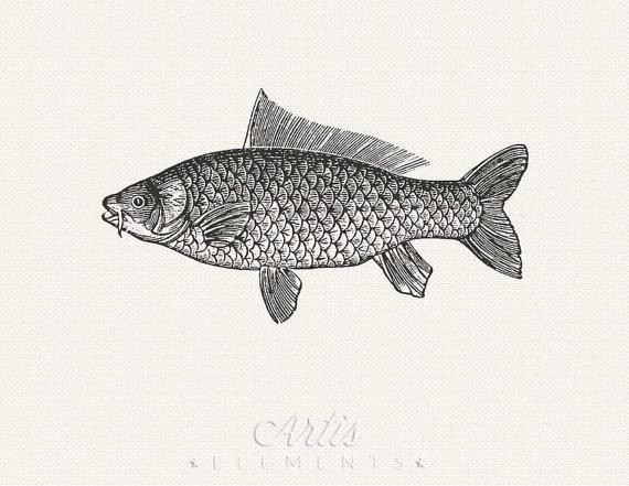 Grandi pesci ClipArt sfondo trasparente stampabile download.