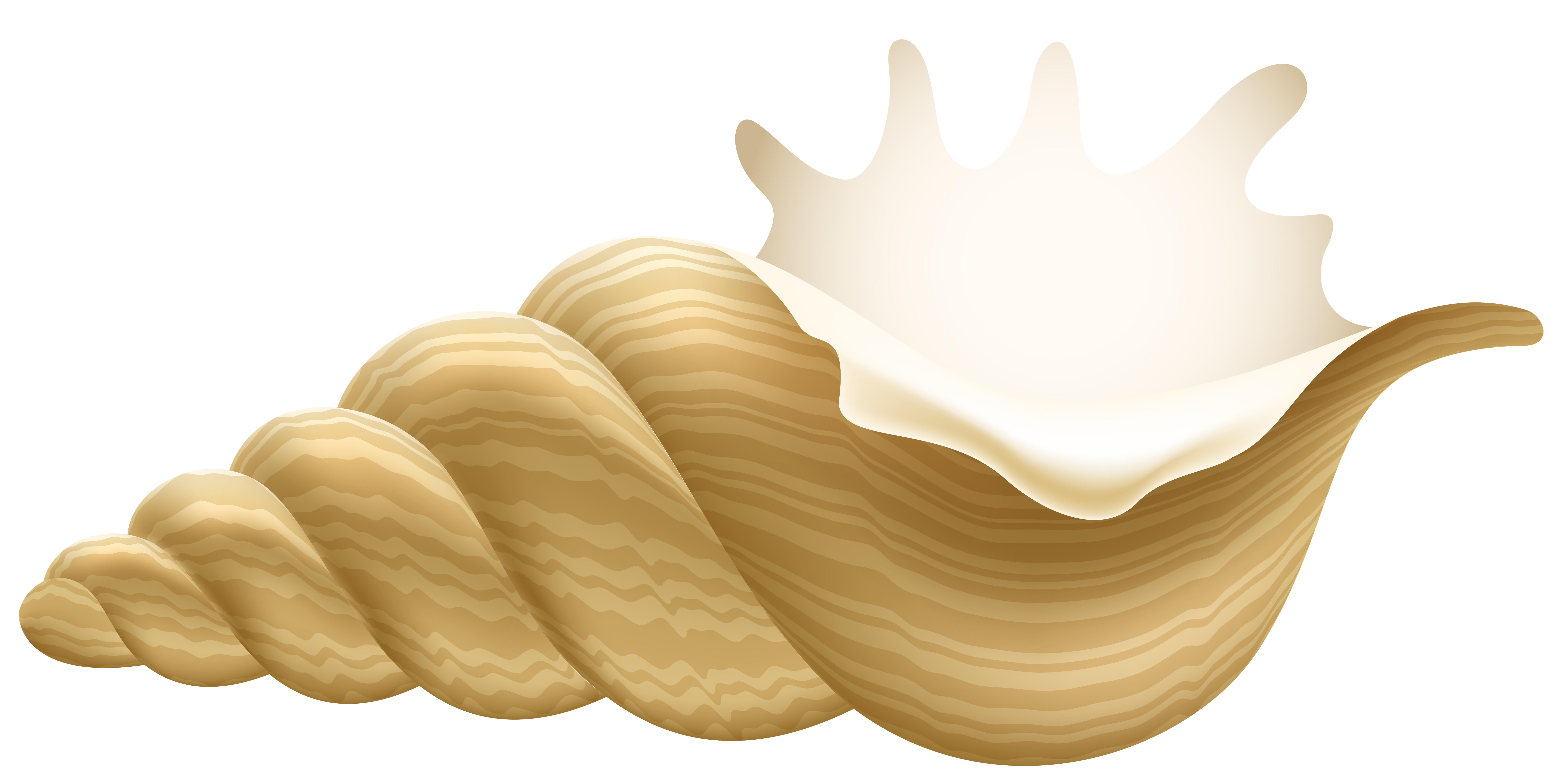 Conch PNG Clip Art.