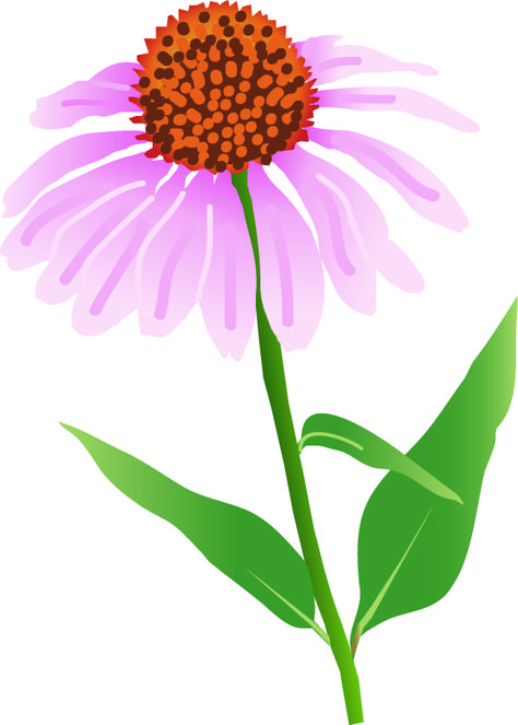 Library of wild yellow coneflower vector library png files.