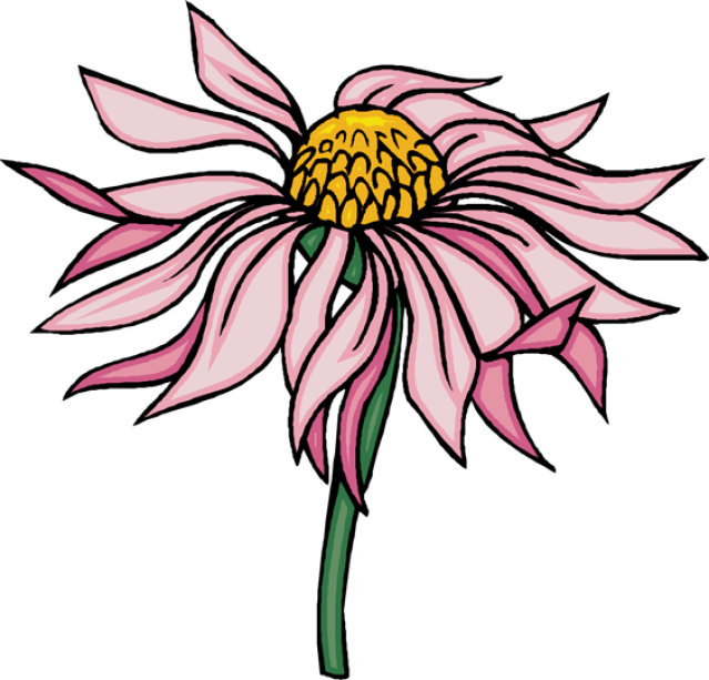 Clip Art Of Beautiful Flowers.