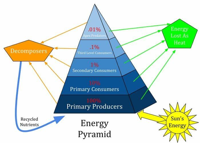 Energy Pyramid.