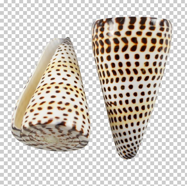 Conus Marmoreus Gastropods Seashell Cone Snails Monetaria.