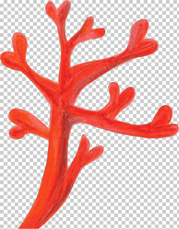Red Coral Coral reef , coral PNG clipart.