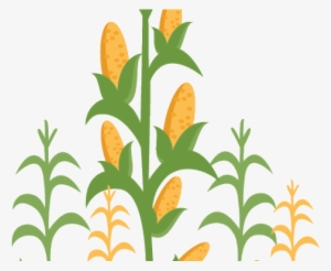Corn Stalks PNG & Download Transparent Corn Stalks PNG.