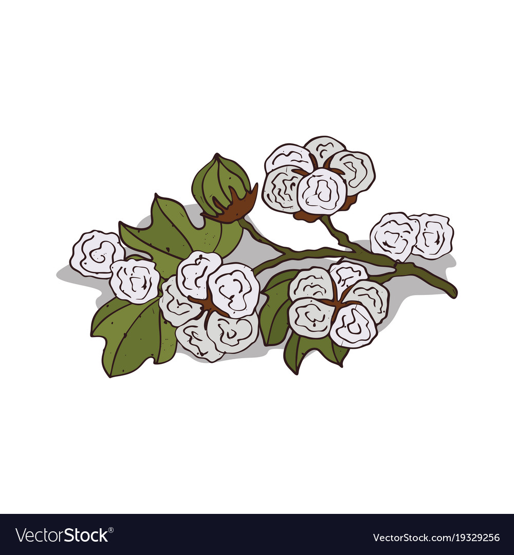Isolated clipart cotton.