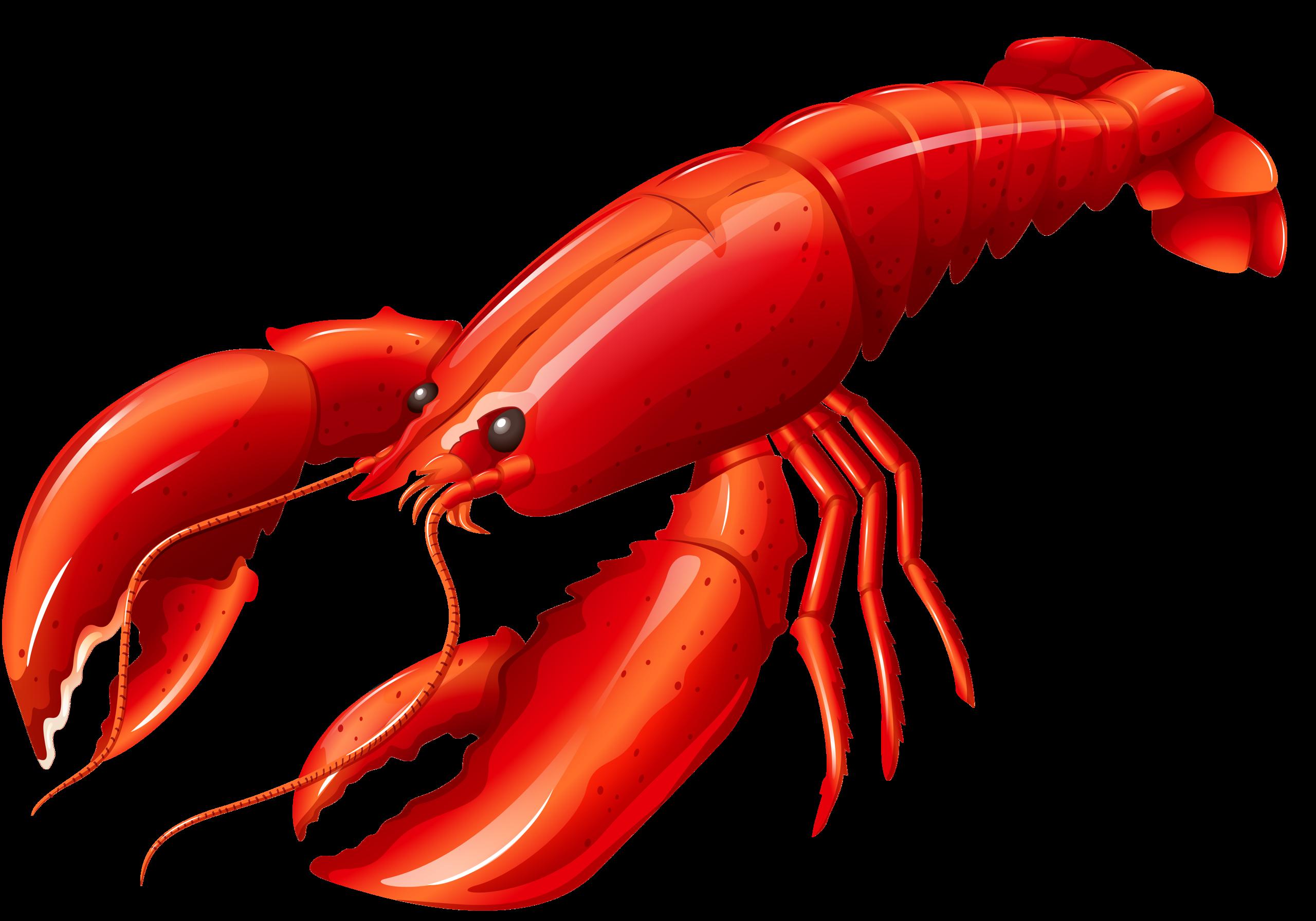 Crayfish Clipart at GetDrawings.com.