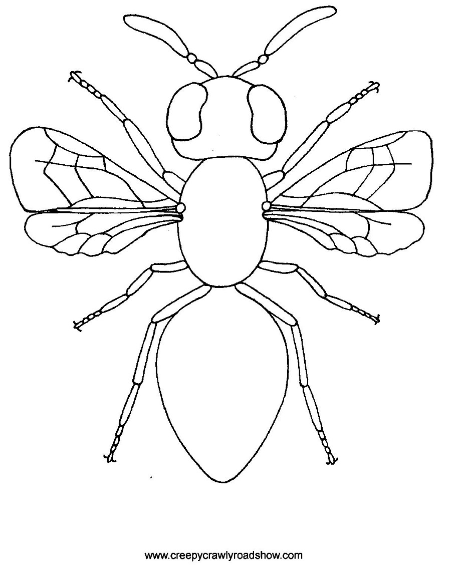 The Creepy Crawlies Show Colouring Pages.