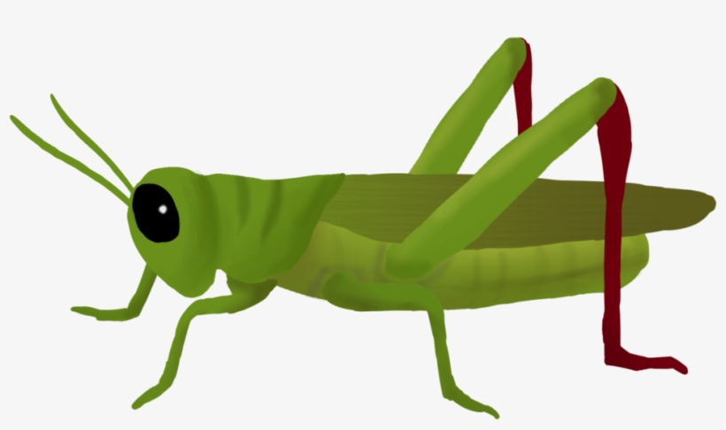 Svg Transparent Clipart Cricket Insect.