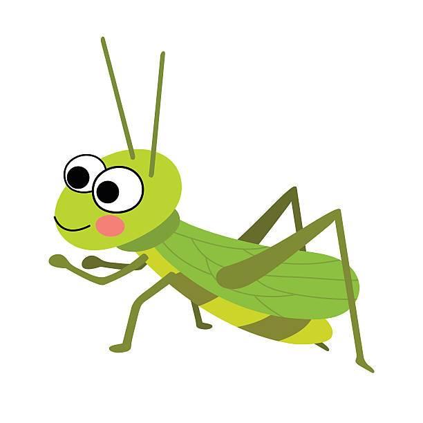 Clipart cricket bug 4 » Clipart Portal.