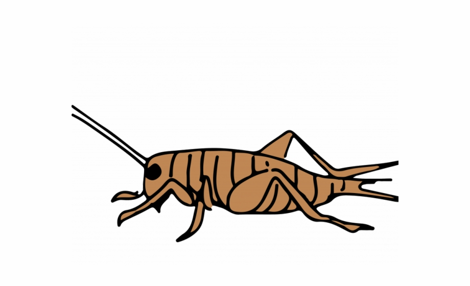 Cricket Clipart Animal Free PNG Images & Clipart Download #505572.