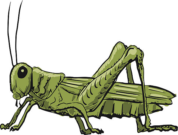 Collection of 14 free Cricket clipart cricket bug bill clipart.