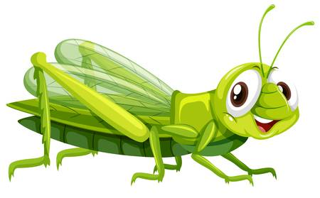 1,031 Cricket Insect Stock Illustrations, Cliparts And Royalty Free.