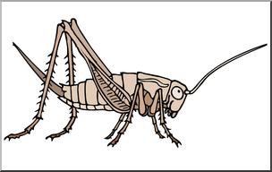 Clip Art: Insects: Cricket Color I abcteach.com.