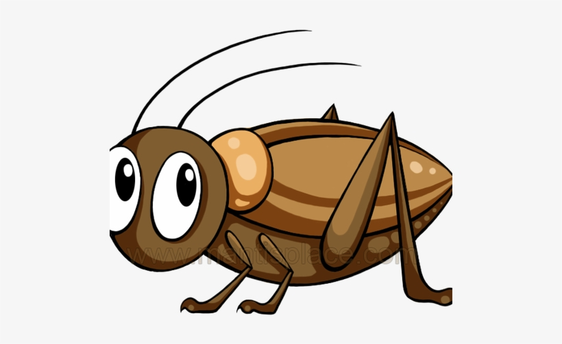 Brown Cricket Insect.