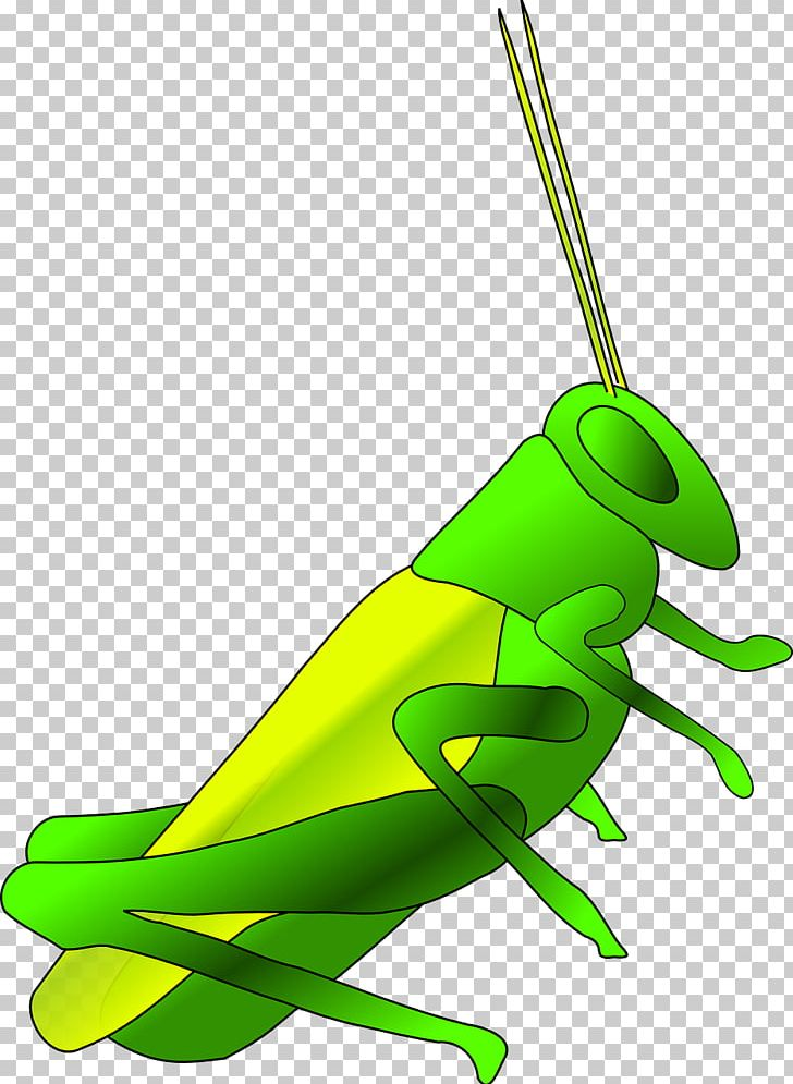 Jiminy Cricket Insect PNG, Clipart, Art, Background Green, Batting.