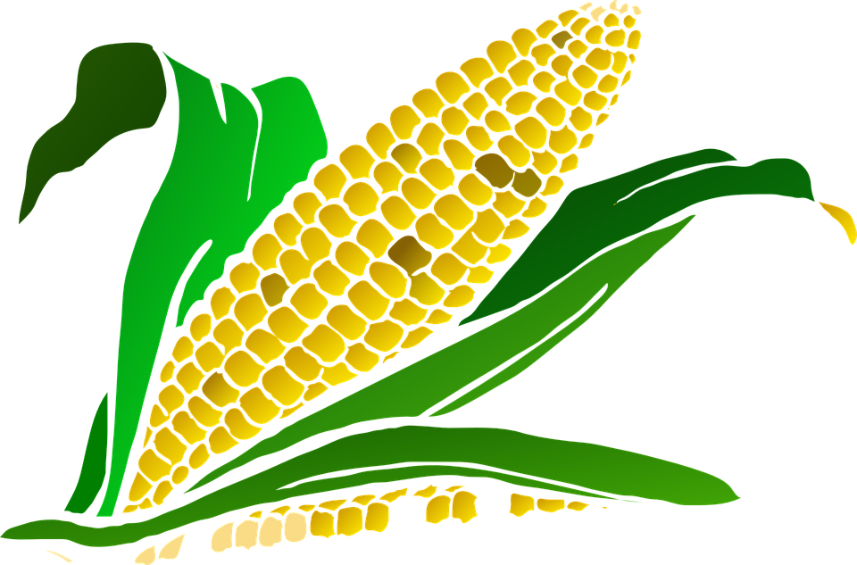 Corn clipart harvesting crop #1260.