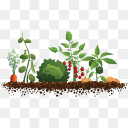 Vector Vegetable Crops, Plant, Carrot, Vegetables PNG And Vect.