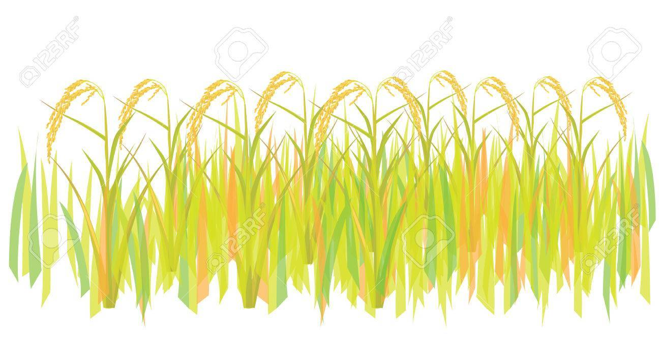 Rice crops clipart 6 » Clipart Portal.