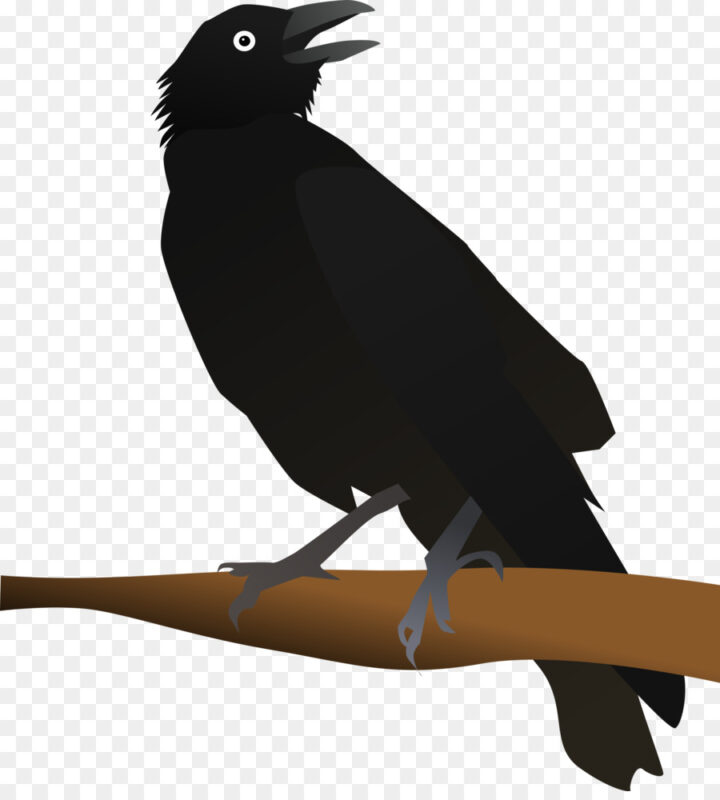 New Caledonian Crow American Crow Clip Art Opencli Clipart.