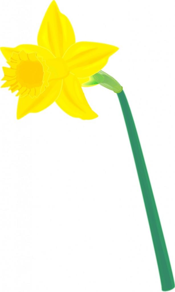 Free Daffodil Cliparts, Download Free Clip Art, Free Clip.