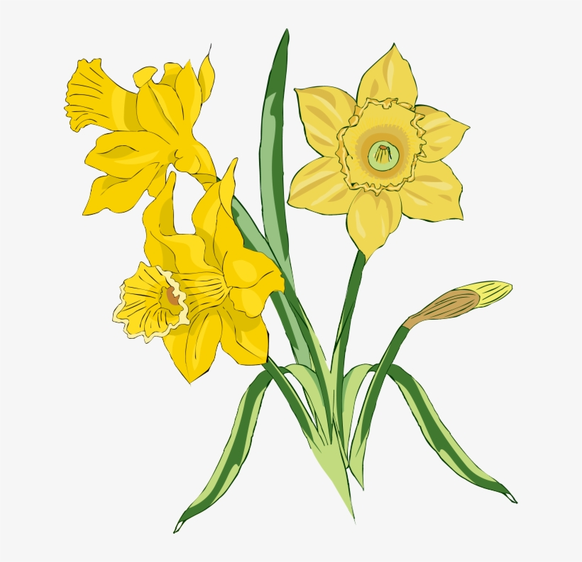 Image Free Download Daffodil Clipart Spring.