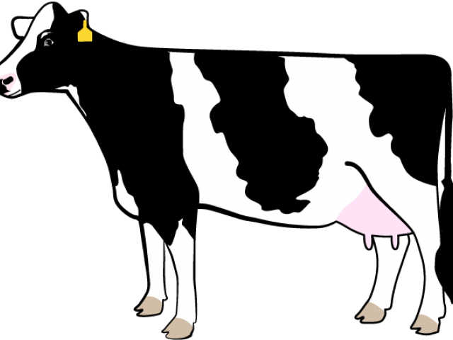Dairy Cow Clipart , Transparent Cartoon.