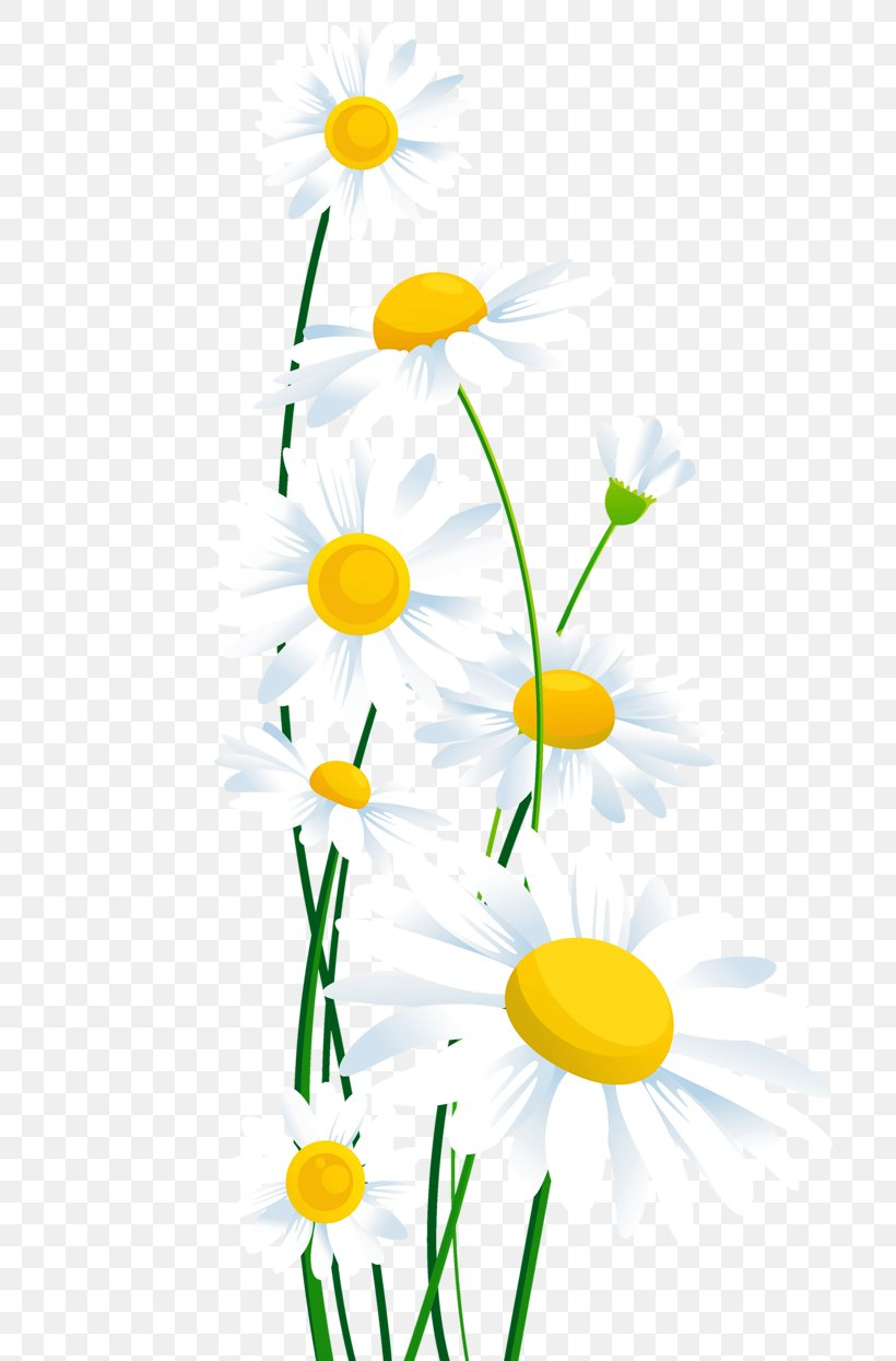Common Daisy Clip Art, PNG, 792x1245px, Common Daisy, Branch.