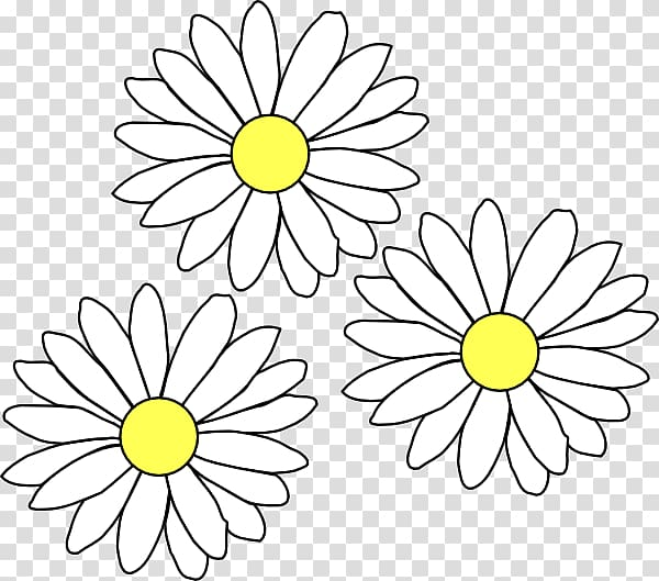 Common daisy , daisies transparent background PNG clipart.