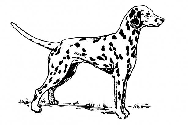 Dalmatian Dog Clipart Free Stock Photo.