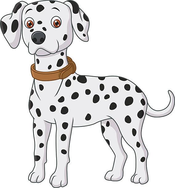 Best Dalmatian Dog Illustrations, Royalty.
